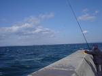 コウナゴ釣り